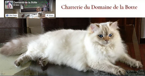 BE_BRI-SCT_chatterie_domaine_botte