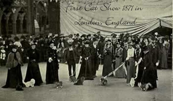 1871-First-Cat-show-in-London